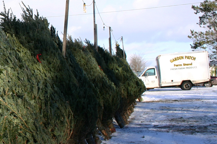Christmas Tree Shops in Newport Are Open For Business