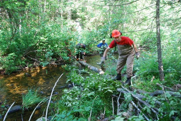 Fish & Wildlife and Trout Unlimited work to improve habitat in the NEK