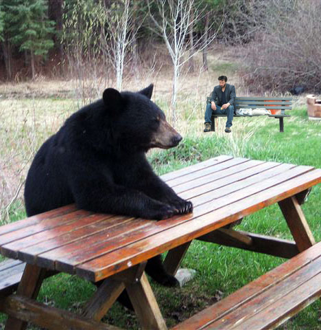 Man charged for feeding bears in Montgomery