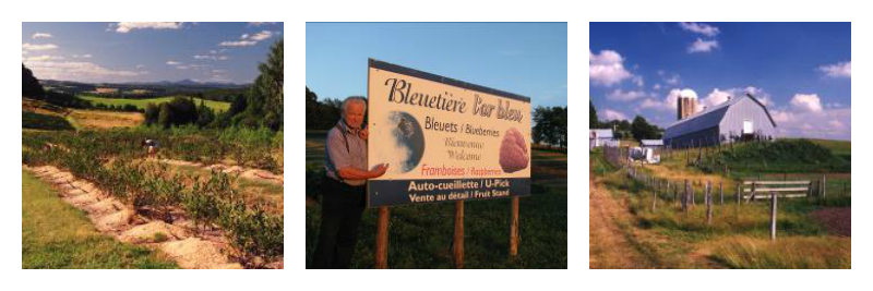 Bleuetière l'Or Bleu berries Stanstead Quebec