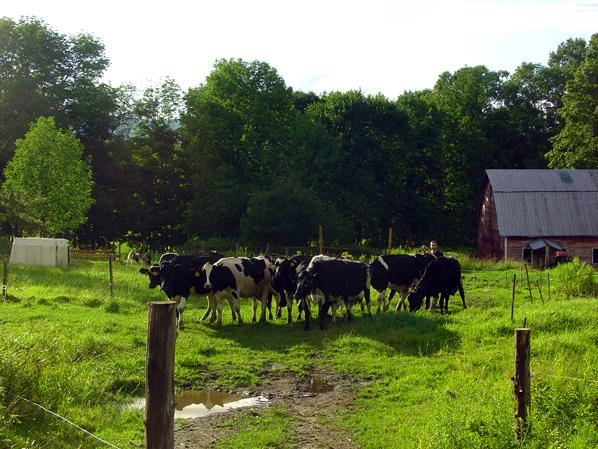 Sweet Rowen Farmstead awarded $24,661 by USDA