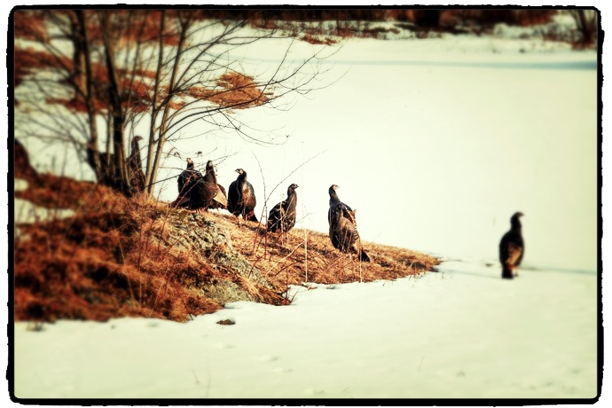 turkey hunting vermont