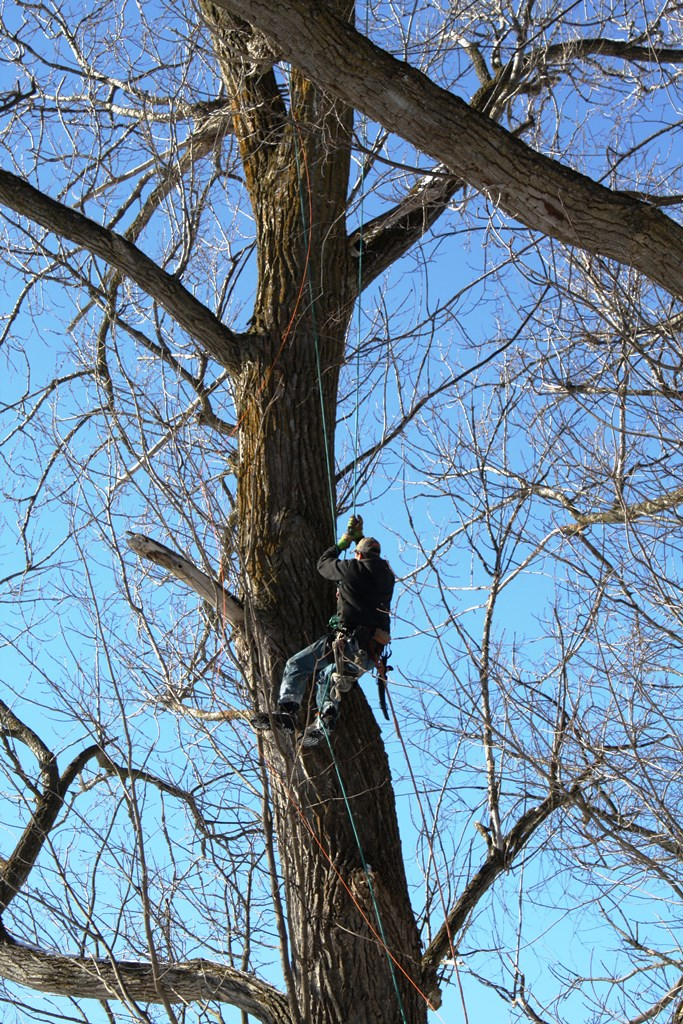 Aaron Chapdelaine, of ACE Tree Removal rescuing a cat stuck over 60 feet in the air on Thursday. Photo by Paula Fiorenza