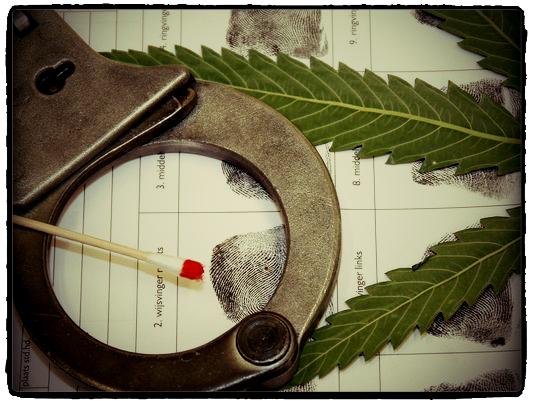 Magog police seize more than 300 marijuana plants during Thursday morning raid