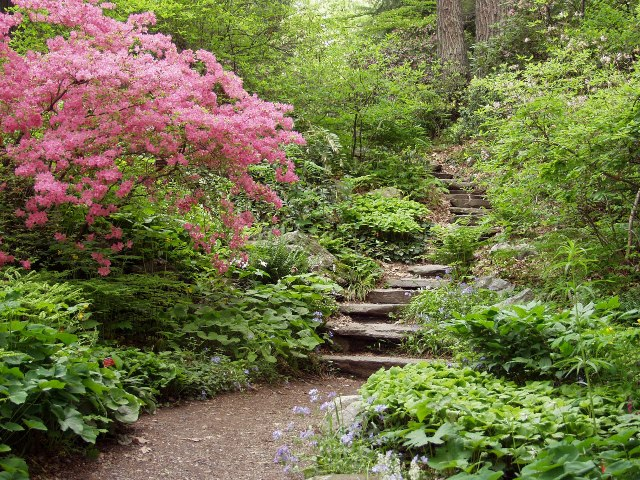 The Vermont Fish & Wildlife Department is encouraging landscapers and gardeners to choose native plants to promote the health of local ecosystems and to provide food for songbirds.  Photo courtesy of the New England Wild Flower Society.