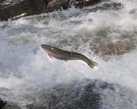 Vermont walleye fishing season underway newport dispatch for Vermont fishing license