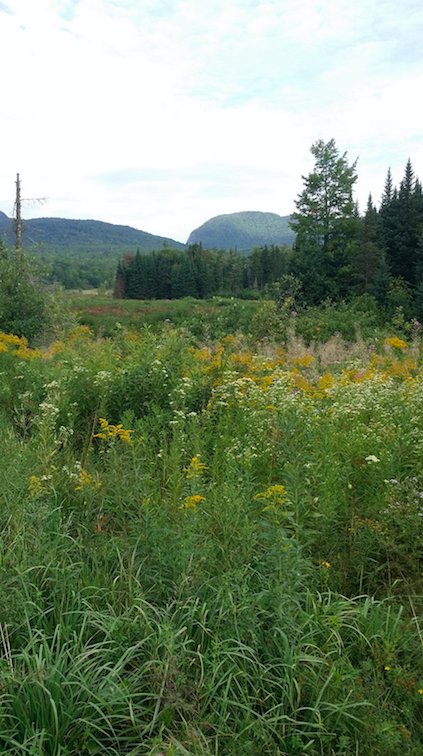 Couple donates Lowell land to Vermont Land Trust