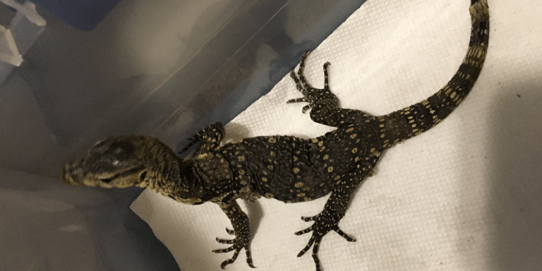 Facebook post leads to Westfield man charged with importing exotic reptiles