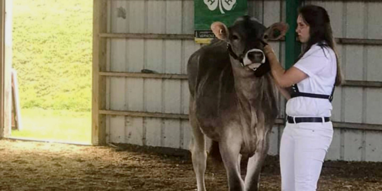 Youths compete in Orleans and Essex counties 4-H dairy show