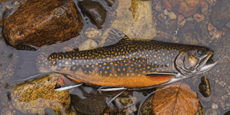 Northeast Kingdom October fishing report