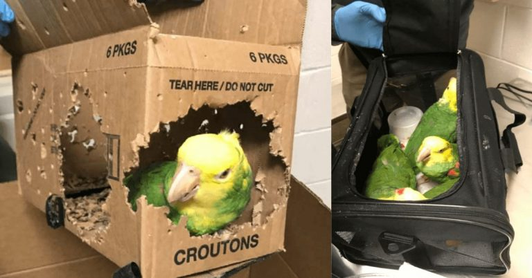 Man charged with smuggling endangered tropical birds in Derby Line