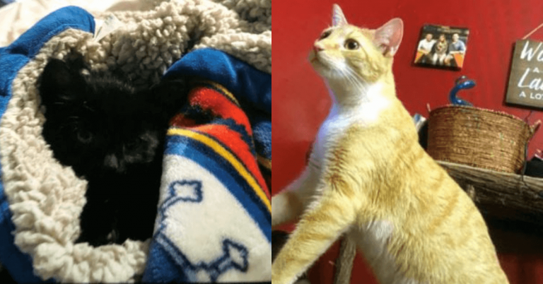 2 cats recovered, 2 still missing after burglary in Derby Line