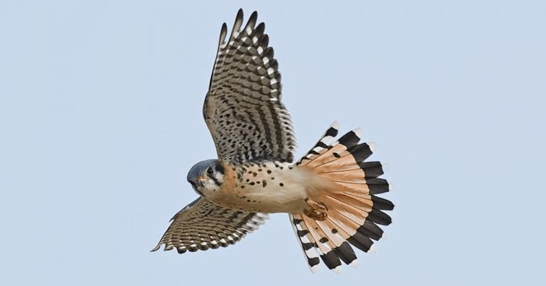 Encounter live raptors in Greensboro this Sunday